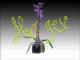 Orquidea en hidrocultivo