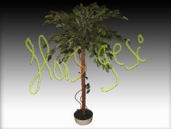 Ficus elastica bola h120